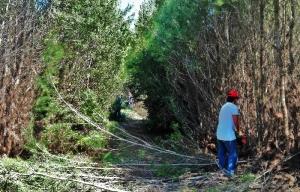 Αντιπυρικές Ζώνες στο Δάσος Καϊάφα (pics)