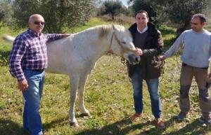 Κ. Μητρόπουλος: «Οφείλουμε να προστατεύουμε τα άλογα της φυλής της Πηνείας»