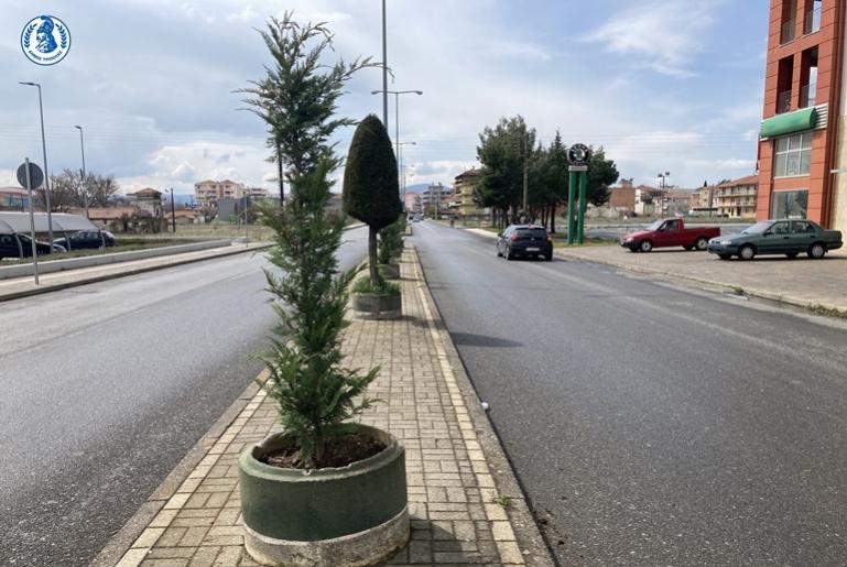 Δενδροφυτεύσεις στην οδό Μουτζουροπούλου και στην Λεωφόρο ΟΗΕ