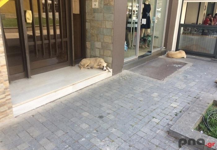 Επίθεση αδέσποτου σκύλου σε άντρα στο κέντρο της Τρίπολης (pics)