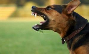 Επίθεση αδέσποτου σκύλου σε γυναίκα στην Τρίπολη