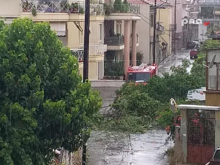 Πτώση δέντρου από την κακοκαιρία στην οδό Υψηλαντου στην Τρίπολη (video - pics)