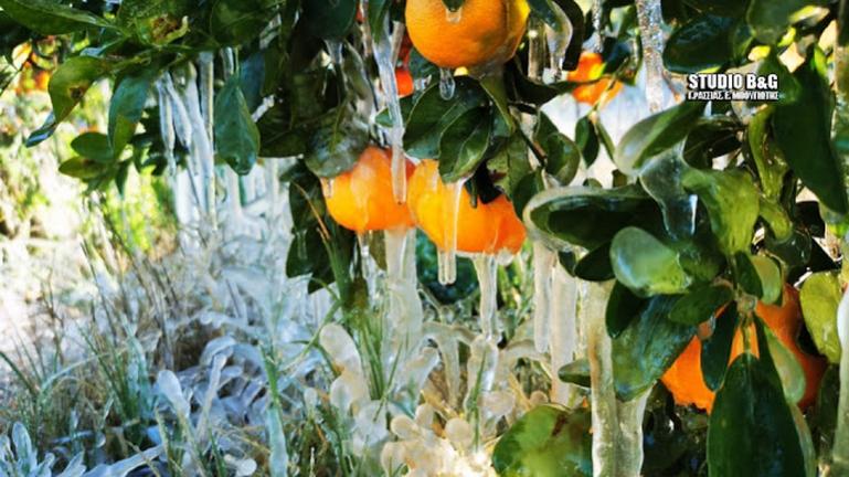 Στο ψυγείο η Αργολίδα - Κρυστάλλωσε ο κάμπος από τις χαμηλές θερμοκρασίες (βίντεο)