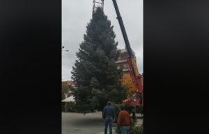 Τοποθετήθηκε το Χριστουγεννιάτικο δέντρο στην κεντρική πλατεία της Τρίπολης (video)