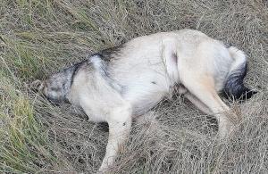 Άλλο ένα σκυλί έχασε τη ζωή του στην Τρίπολη