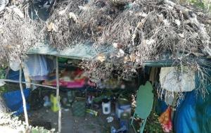 Εντοπίστηκε φυτεία δενδρυλλίων κάνναβης στην Μεγαλόπολη Αρκαδίας