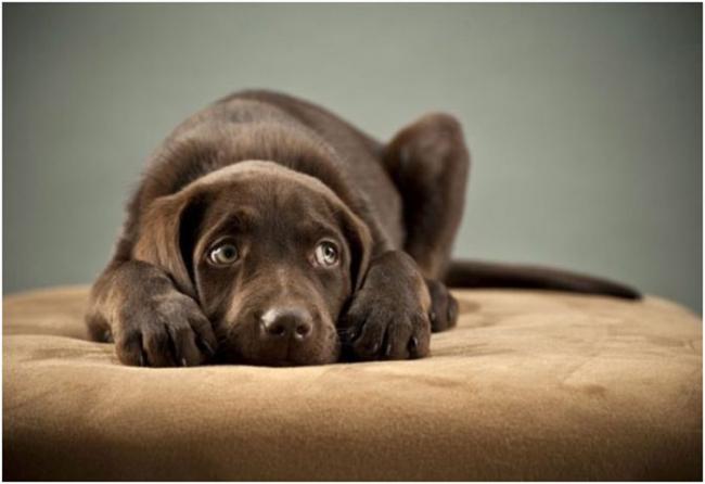 Τα «πάθη» των βεγγαλικών για τους σκύλους μας