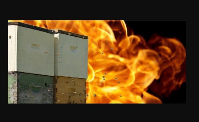 «Προστασία των μελισσιών από τις πυρκαγιές»