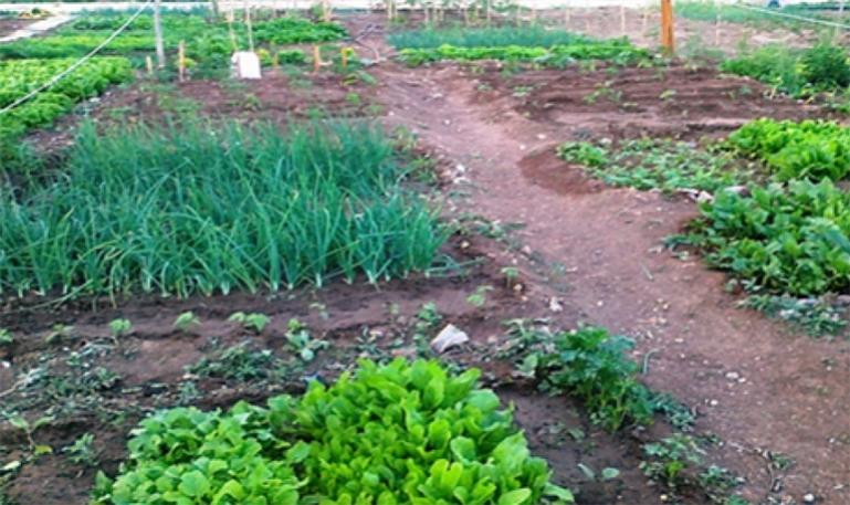 Ο Δήμος Τρίπολης συνεχίζει και φέτος το θεσμό του Δημοτικού Λαχανόκηπου